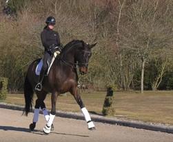 Un ancien cheval de Grand Prix français proposé à la vente chez Andreas Helgstrand