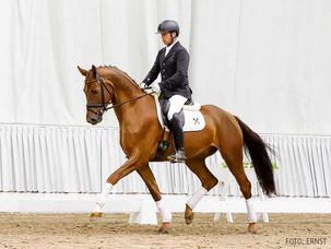 Ventes de Verden : 6 chevaux rejoignent la France