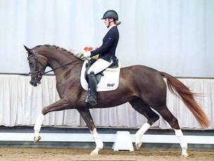 Ventes du Westphalien : 2 chevaux vendus à 2 cavaliers de Grand Prix français