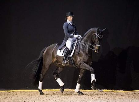 Sport Horses Pro : une vente aux enchères en ligne 5* du 2 ans au cheval de Grand Prix