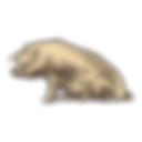 porc breton