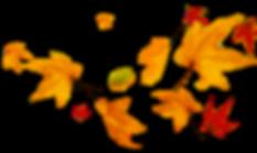 hojas-otoño-volando-png.png
