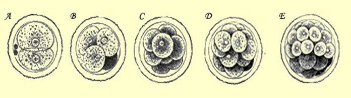 меланогенез1.jpg