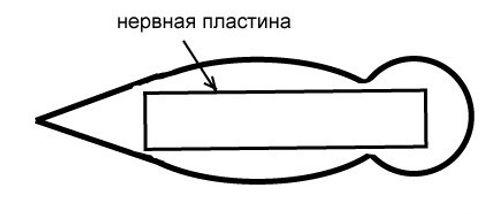 меланогенез2.jpg