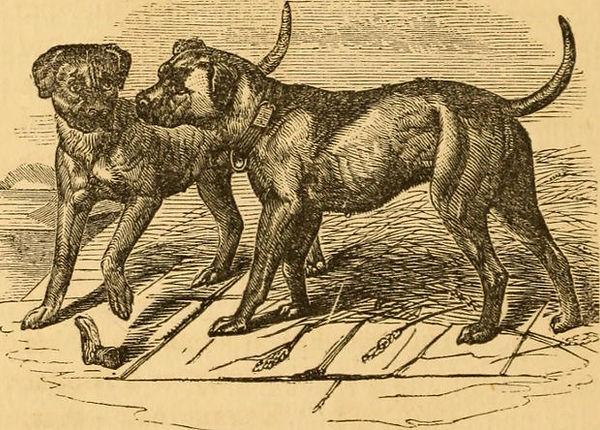 Собаки начали есть растительную пищу еще