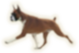 логопент2.png