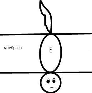 меланогенез4.jpg