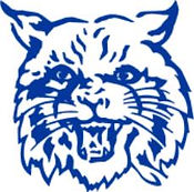 blue wildcat.jpg