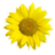 sunflowerFull.png