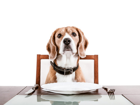 Confused what to feed your dog?