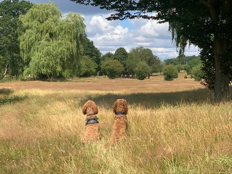 Kate's K9's Best Dog Friendly Walks Near Welwyn and Hatfield