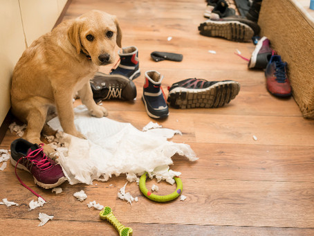 Resolving Separation Anxiety – The Dog Listening Way