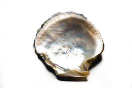 Concha de ostra perlífera Pinctada Margaritífera de Sumiperla.s.a