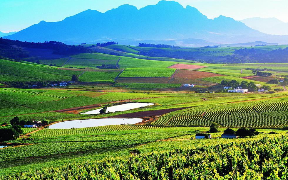 Home of DeWaal Wines.jpg