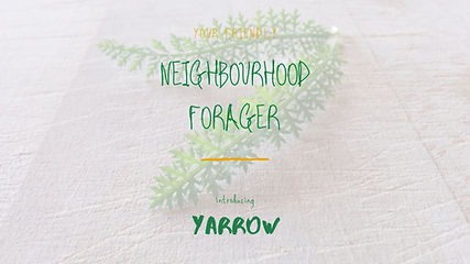 NF-Yarrow.jpg