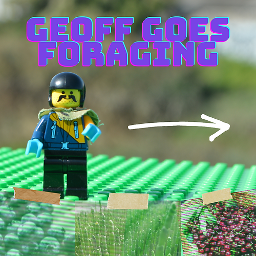 Geoff goes foraging.png