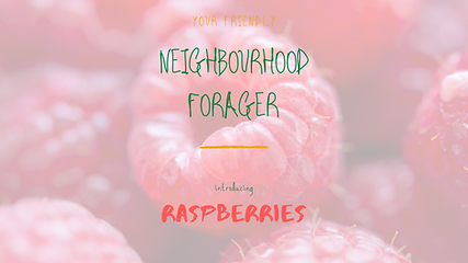 Raspberries - pic.png