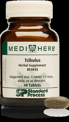 Tribulus (40T)