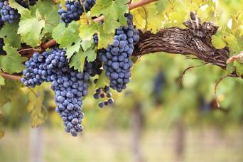 A la découverte de vins avec Sowine