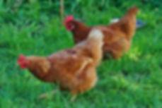 poulepourtous-2.jpg