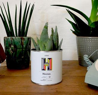 newest 4d70a 14a7f ... pierres-céramiques, des plantes prêtes à pousser notamment des trèfles  à quatre feuilles) sur l e-shop de Daiwaie. Un coup de coeur assuré et  mérité.