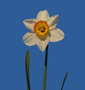 blossom-plant-sky-white-flower-petal-924