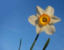 blossom-plant-sky-white-meadow-flower-92