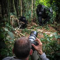 2018Oct12 Gorilas in the Virunga parc