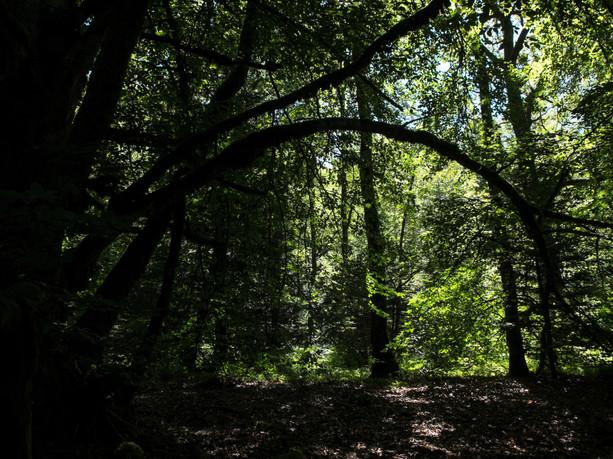 Bois de Chaleix
