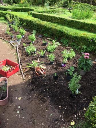 Plants Going In.jpg