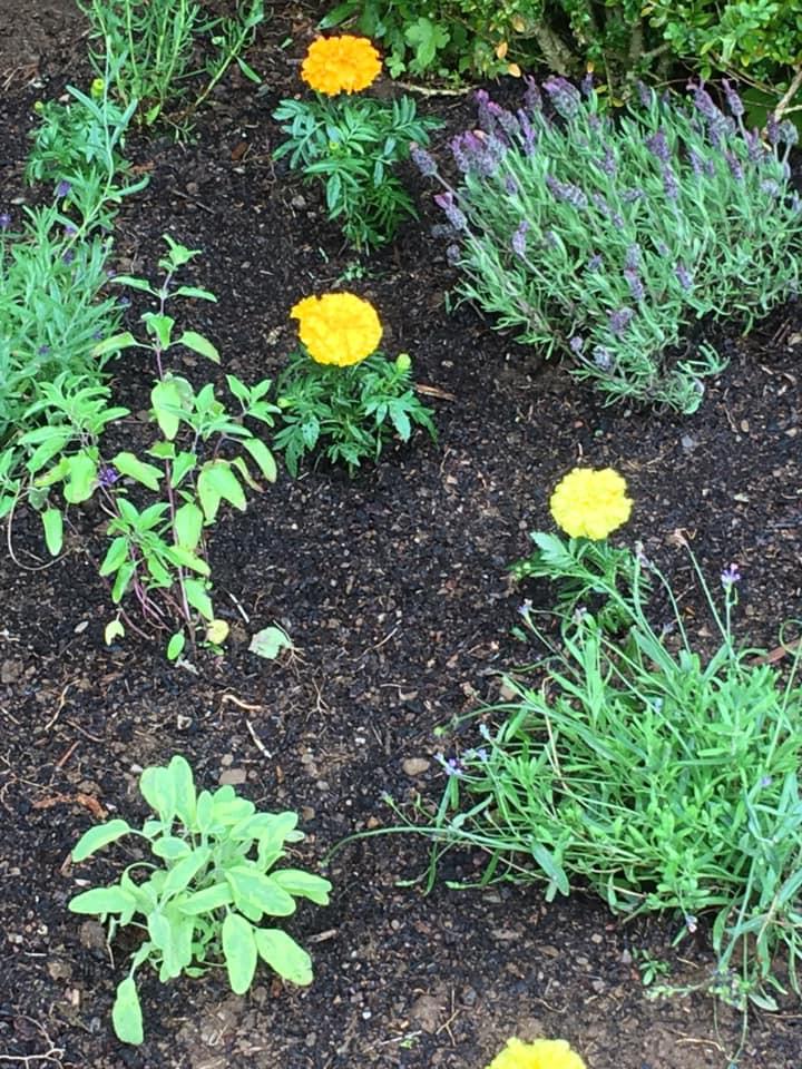 Garden Project Flowers.jpg