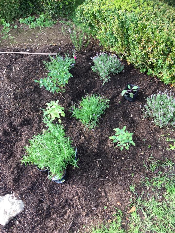 Garden Project Herbs.jpg