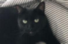 Bill. gato negro