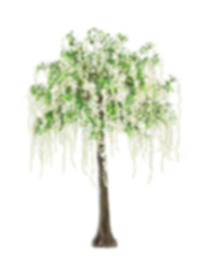 280cm witseria tree .jpg