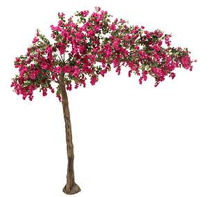 canopy tree pink_edited.jpg