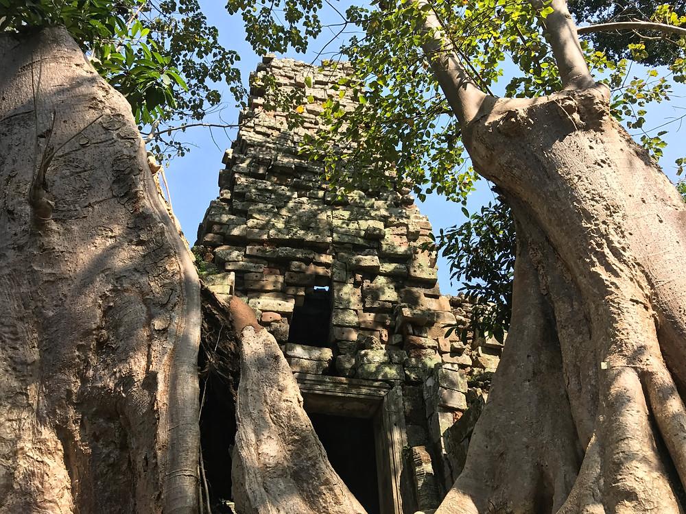 Angkor; natura; forza; brevi racconti e aneddoti di viaggio; cambogia; viaggi