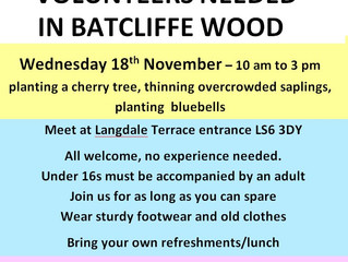 Volunteer in Batcliffe Wood