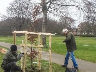 Replacement specimen trees
