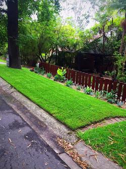 pymble front yard