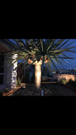 caddens dragon tree with lighting