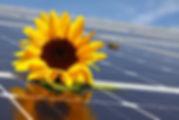 001 Symbolfoto Photovoltaik.jpg