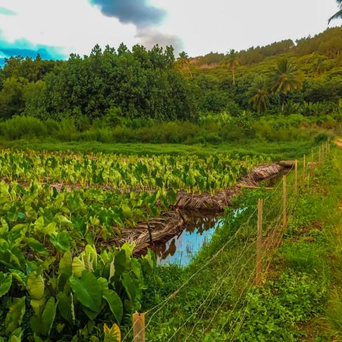 Local Plantations
