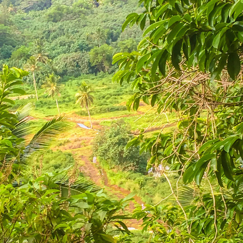 Turokopa Track