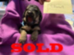 sold-males1.jpg