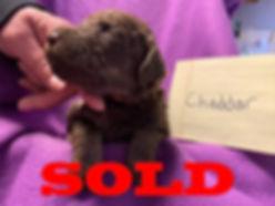 sold-males3.jpg