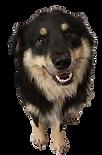 doggo%202_edited.png