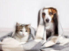 Dog and cat under a plaid. Pet warms und