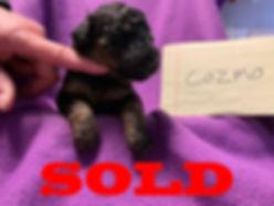 sold-males4.jpg