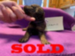 sold-males2.jpg