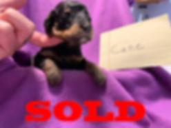 sold-males6.jpg